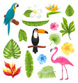 set tropical flowers exotic birds and plants vector image