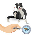 flea poster with scratching dog and insect vector image vector image