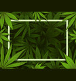 green hemp frame marijuana leafs border medical vector image