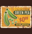 pea green metal plate rust vegetable beans poster vector image vector image
