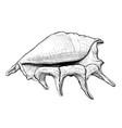seashell handdrawn sketch vector image vector image