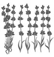 set black and white images lavender sprigs vector image vector image