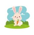 Rabbit cartoon icon Woodland animal vector image