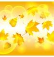 autumn autumnal background beautiful beauty botany vector image