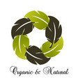 biological environmental group of leafs icon vector image vector image