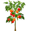 colorful pepper plants vector image