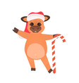 little ox in santa hat holding christmas candy vector image