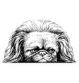 pekingese dog sticker on wall in form vector image vector image