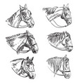 set hand drawing horses 9 vector image vector image