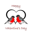 A couple of cute bullfinches pyrrhula with a heart vector image