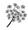 a sprig of dill the drawn contour vector image vector image