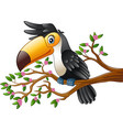 cartoon funny toucan on a tree branch vector image vector image