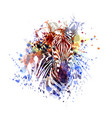 color of zebra vector image vector image