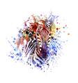 color zebra vector image