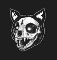 skull cat cute vector image