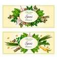 spices and herbs banner set for food design vector image vector image