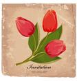 tulip7 vector image vector image