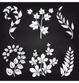 Decorative floral branches on blackboard vector image