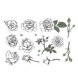 set of hand-drawn floral elements in sketch style vector image vector image