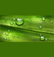 tree leaf texture with water drops green plant vector image vector image