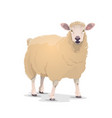 white sheep domestic cartoon animal icon vector image