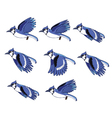 Blue Jay Animation Sprite vector image