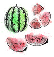 Hand drawn set of watermelon sketch vector image
