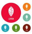 lemon leaf icons circle set vector image