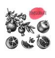 pomegranate ink sketch set vector image vector image