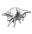 seashell handdrawn sketch vector image vector image