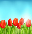 nature floral background with tulips flowers vector image