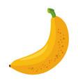 bananas sweet fruit vector image