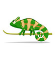 chamelion animal standing on a white background vector image