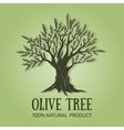 hand drawn graphic olive tree vector image