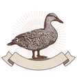 duck design vector image vector image