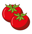 fresh tomatoes isolated icon vector image