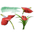 red watercolor flower set vector image vector image