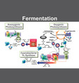 fermentation vector image