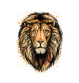 portrait of a lion head from a splash of vector image