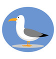 seagull on white background vector image vector image