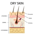The layers of dry skin