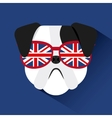 english bulldog design vector image vector image