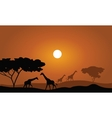 Giraffe silhouette savanna landscape vector image