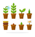 house plants and flowers in pots flat isolated vector image