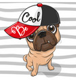 cute pug dog with a red cap vector image