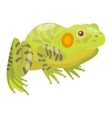 Frog cartoon tropical animal vector image