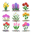 garden flowers plants on soil vector image