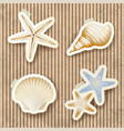 seashells on cardboard background vector image
