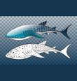 whale shark with its doodle on transparent vector image