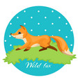 wild fox colorful of night hunter on vector image